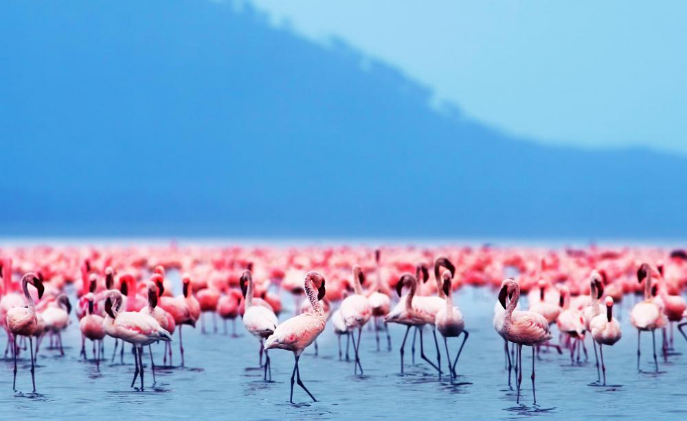 Animal Print Pink Wallpaper What Is A Flamingo With Pictures