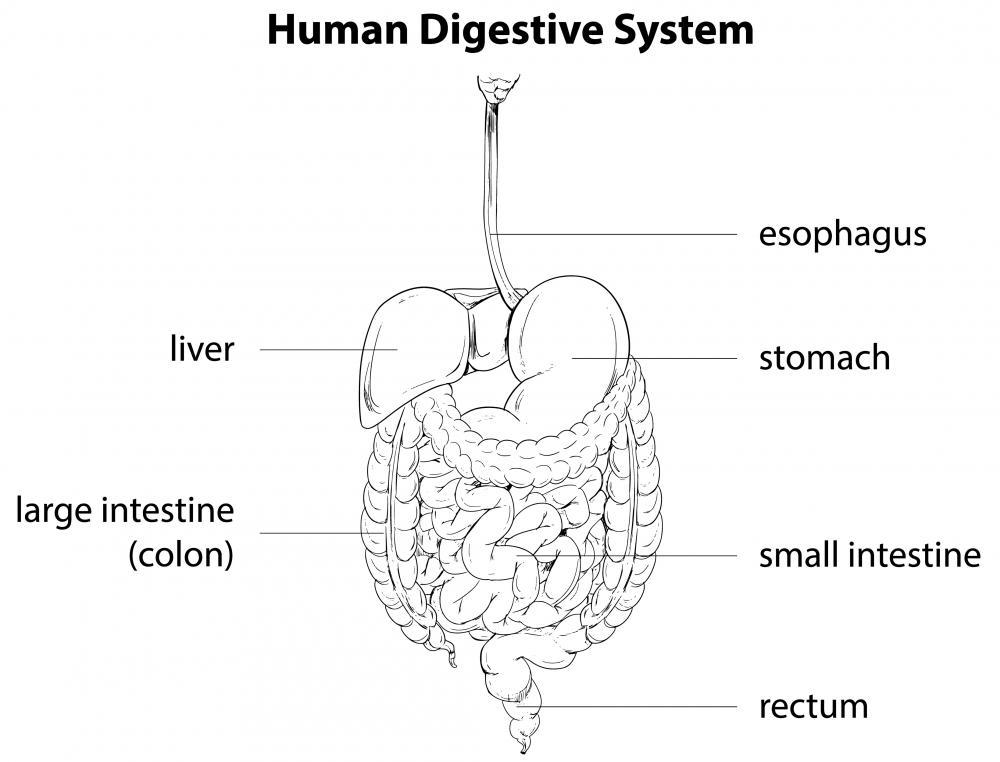diagram of the hepatic flexure