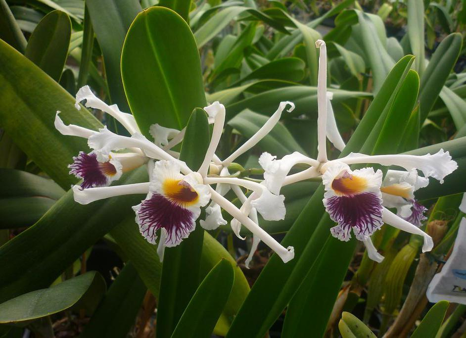 New Foreign Cars Wallpapers What Are The Different Types Of Orchid Pot With Pictures