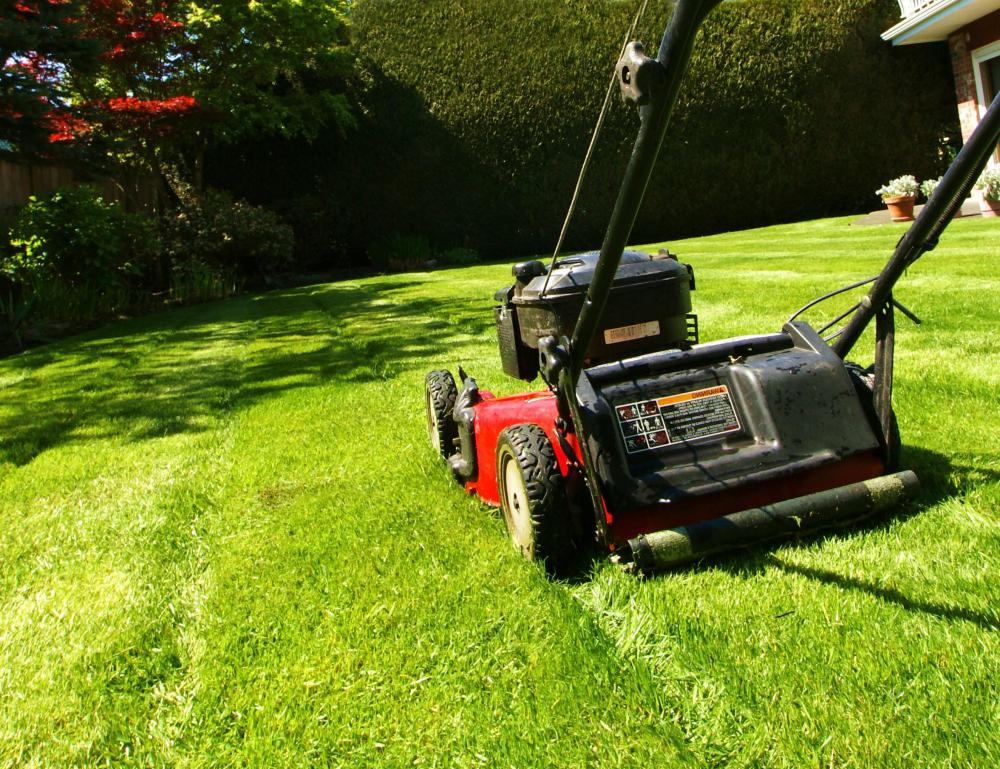 What are the Basics of Yard Work? (with pictures)
