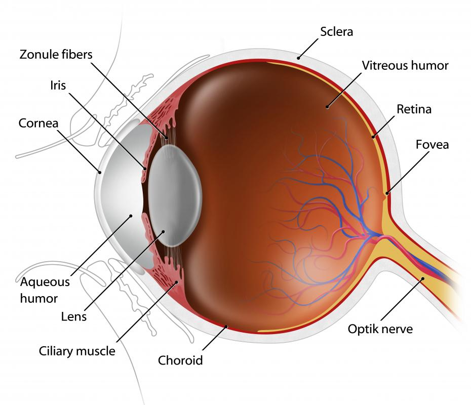 What are Dilated Pupils? (with pictures)
