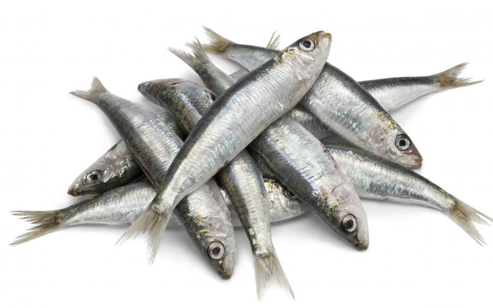 Define Meaning Of Hindi What Is A Sardine? (with Pictures)