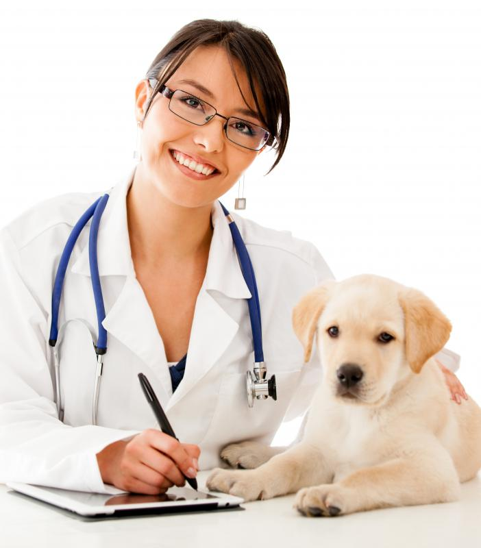 I go to school to be a veterinarian I have wanted to be a vet - veterinarian job description