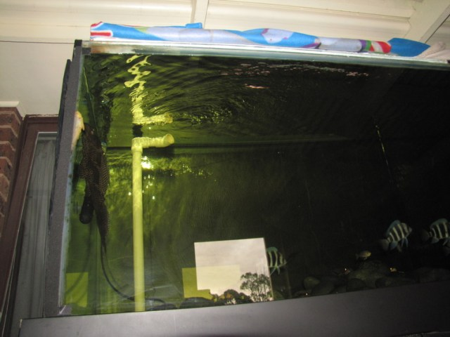 8ft Tank, 6ft Sump tank   Very Cheap !!!!!