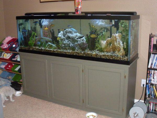 Fish tank filter maintenance 125 gallon 2017 fish tank for 125 gallon fish tank for sale