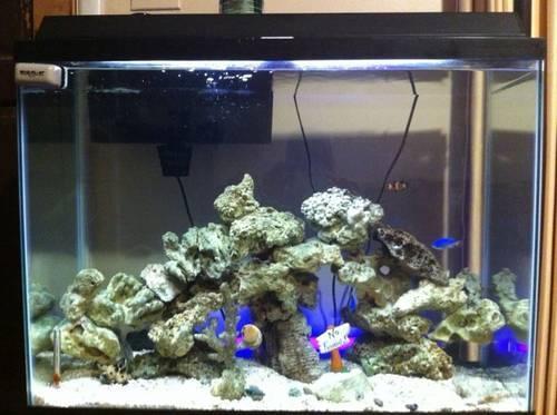 40 gallon saltwater fish tank for Sale in Little Rock, Arkansas