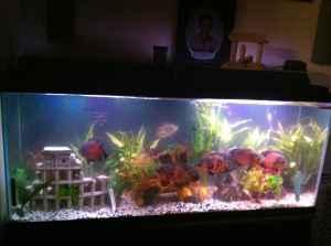 55 Gallon Fish Tank W/Stand   (Fairbanks for sale in Fairbanks, Alaska