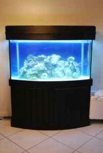 90 gallon bowfront fish tank (ocala ) for Sale in Ocala, Florida