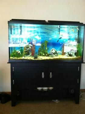 Beautiful 55 gallon Fish Tank with Modern Black Stand for Sale in