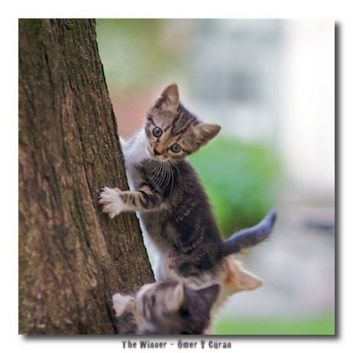 Cute Cats Deviantart Wallpaper Cats Images Kitty Climbing A Tree Wallpaper And Background