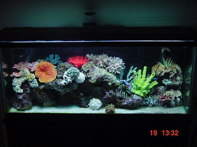 Photo Caption: 55 gallon marine tank with 85 pounds of cured live figi