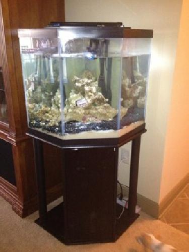Aquarium for sale jacksonville fl vision for aquarium to for Fish tanks craigslist