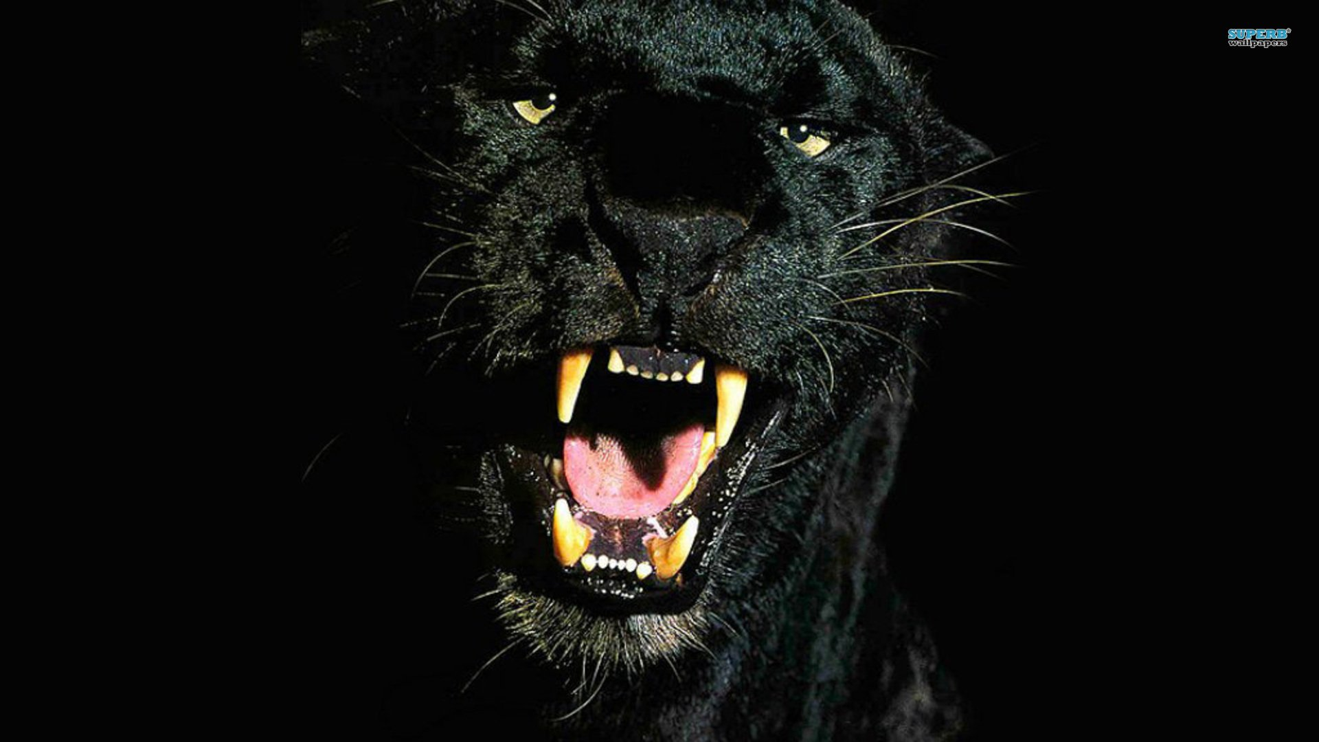 Pantera Wallpaper For Android 100 Black Panther Hd Wallpapers Background Images Wallpaper Abyss