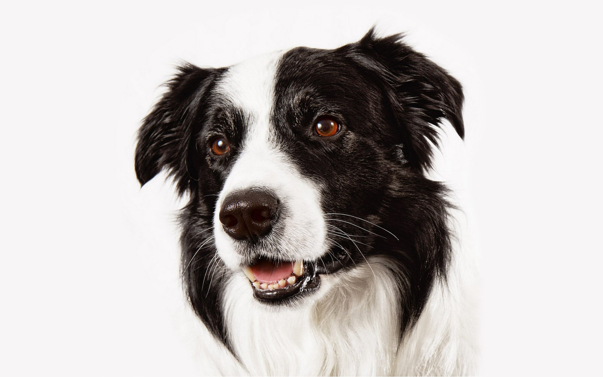 Iphone X Wallpaper With Border Dog Full Hd Wallpaper And Background Image 1920x1200