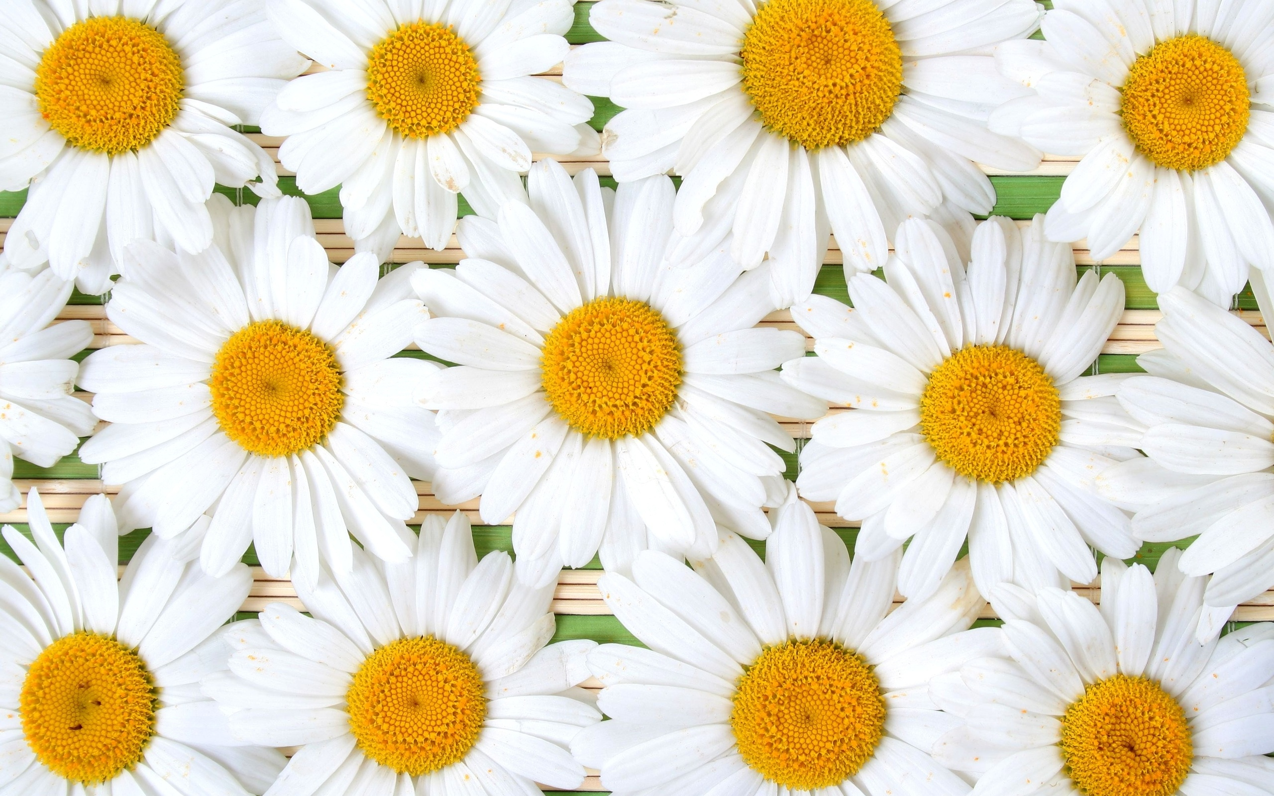 The Yellow Wallpaper Symbolism Quotes Daisy Hd Wallpaper Background Image 2560x1600 Id