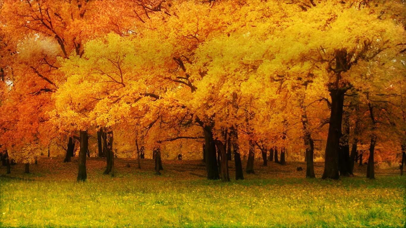 Avatar Wallpaper Hd 3d Autumn Forest Wallpaper And Background 1366x768 Id 460146