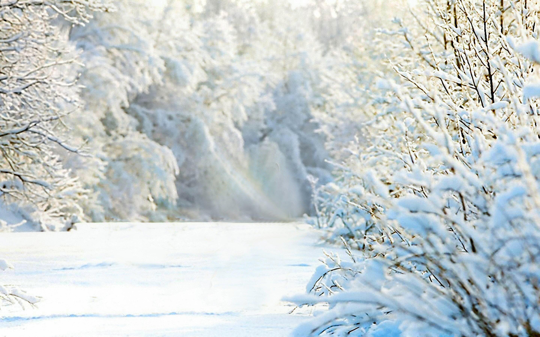 Iphone 5 Falling Snow Wallpaper Nature 18 High Noon Wonderland 10february2014monday