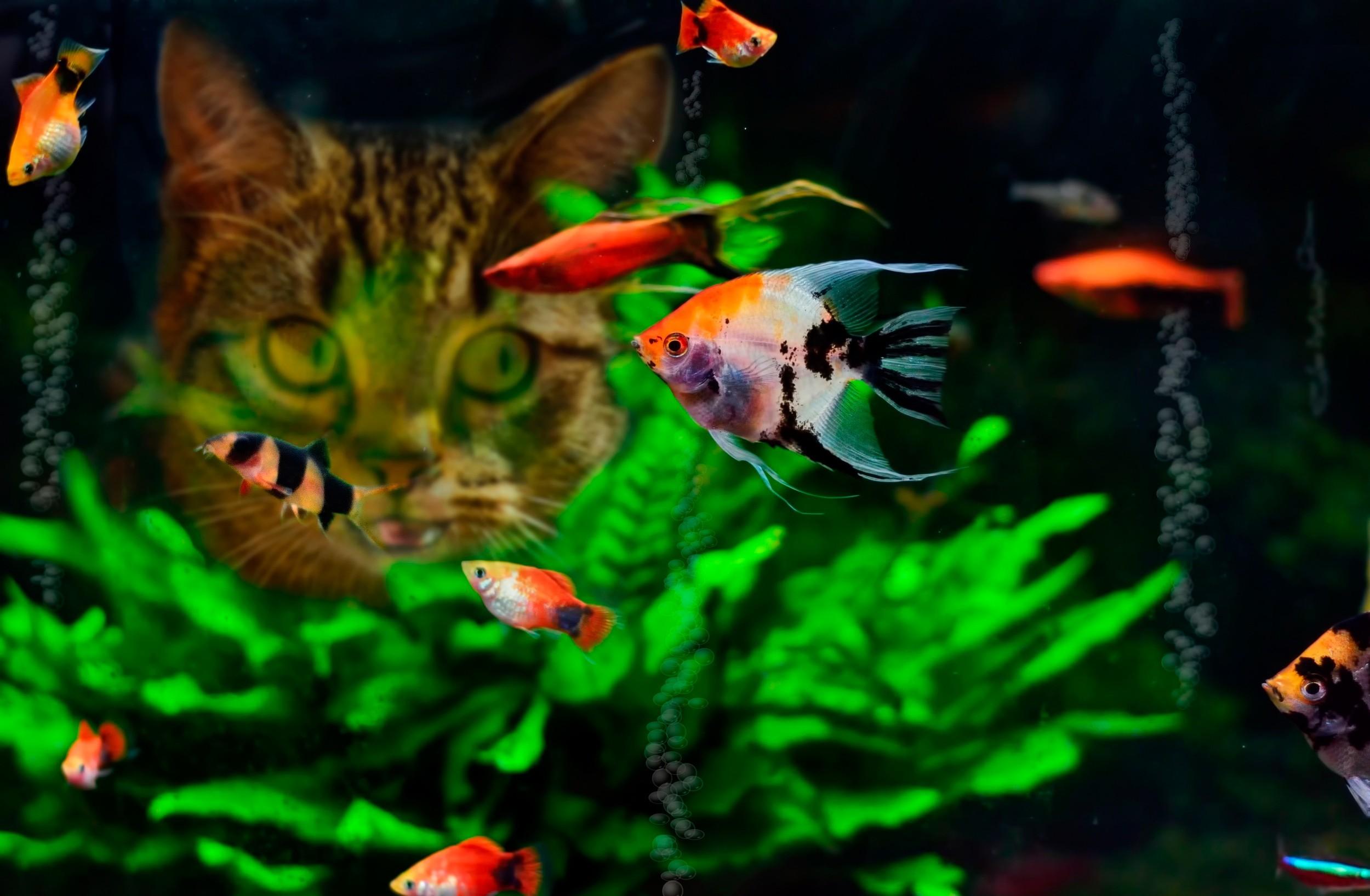 Hd Fish Live Wallpaper For Pc Poisson Fond D 233 Cran Hd Arri 232 Re Plan 2500x1636 Id