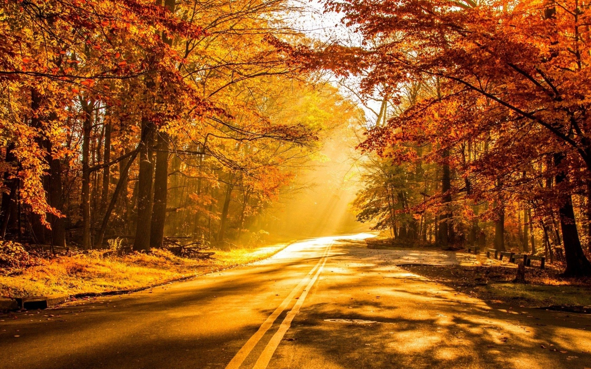 Fall Iphone Wallpaper Pinterest Fall Full Hd Wallpaper And Background Image 1920x1200