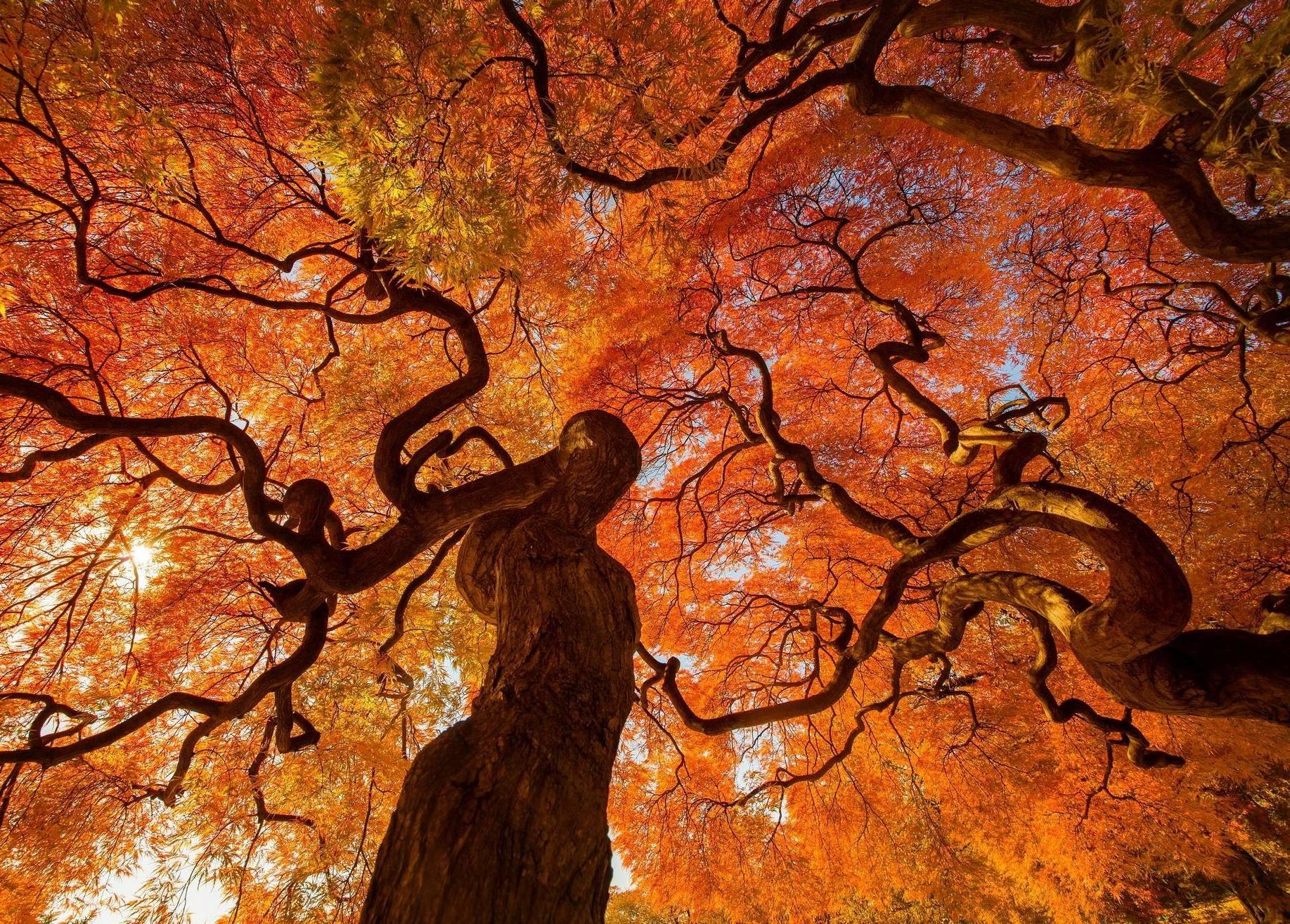 Fall Wallpaper Japan Autumn Tree Fond D 233 Cran And Arri 232 Re Plan 1835x1315 Id