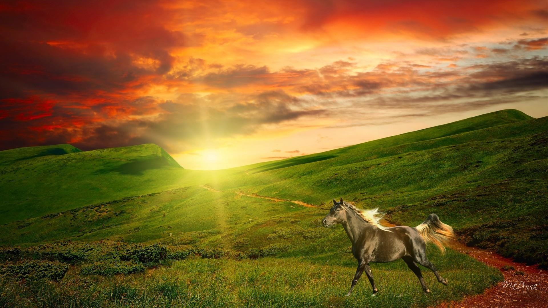 Interfacelift Fall Wallpaper Horse In Field At Sunrise Hd Wallpaper Background Image