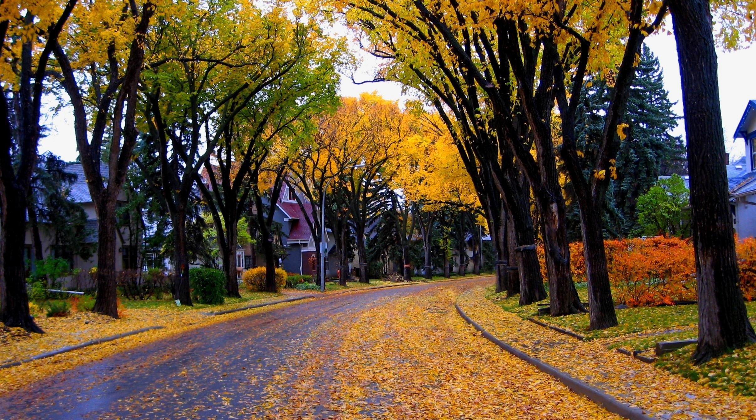 Portland Oregon Fall Had Wallpaper Street In Autumn Hd Wallpaper Background Image