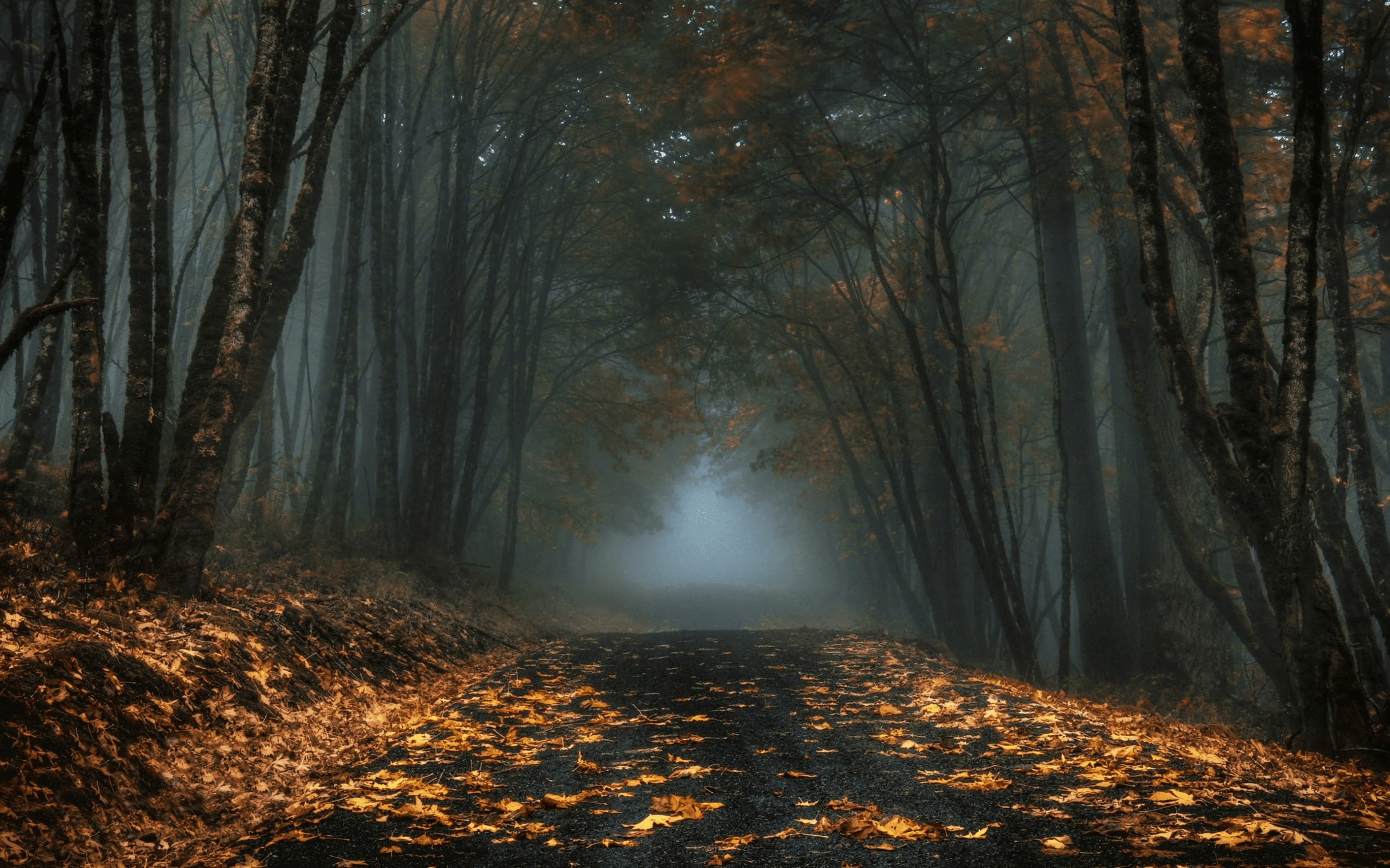 Fall Foliage Wallpaper For Iphone Foggy Autumn Forest Road Hd Wallpaper Background Image