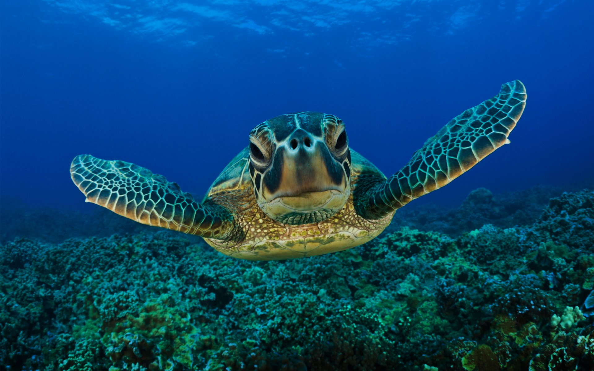 Sea Turtles Wallpaper 255 Turtle Hd Wallpapers Background Images Wallpaper Abyss