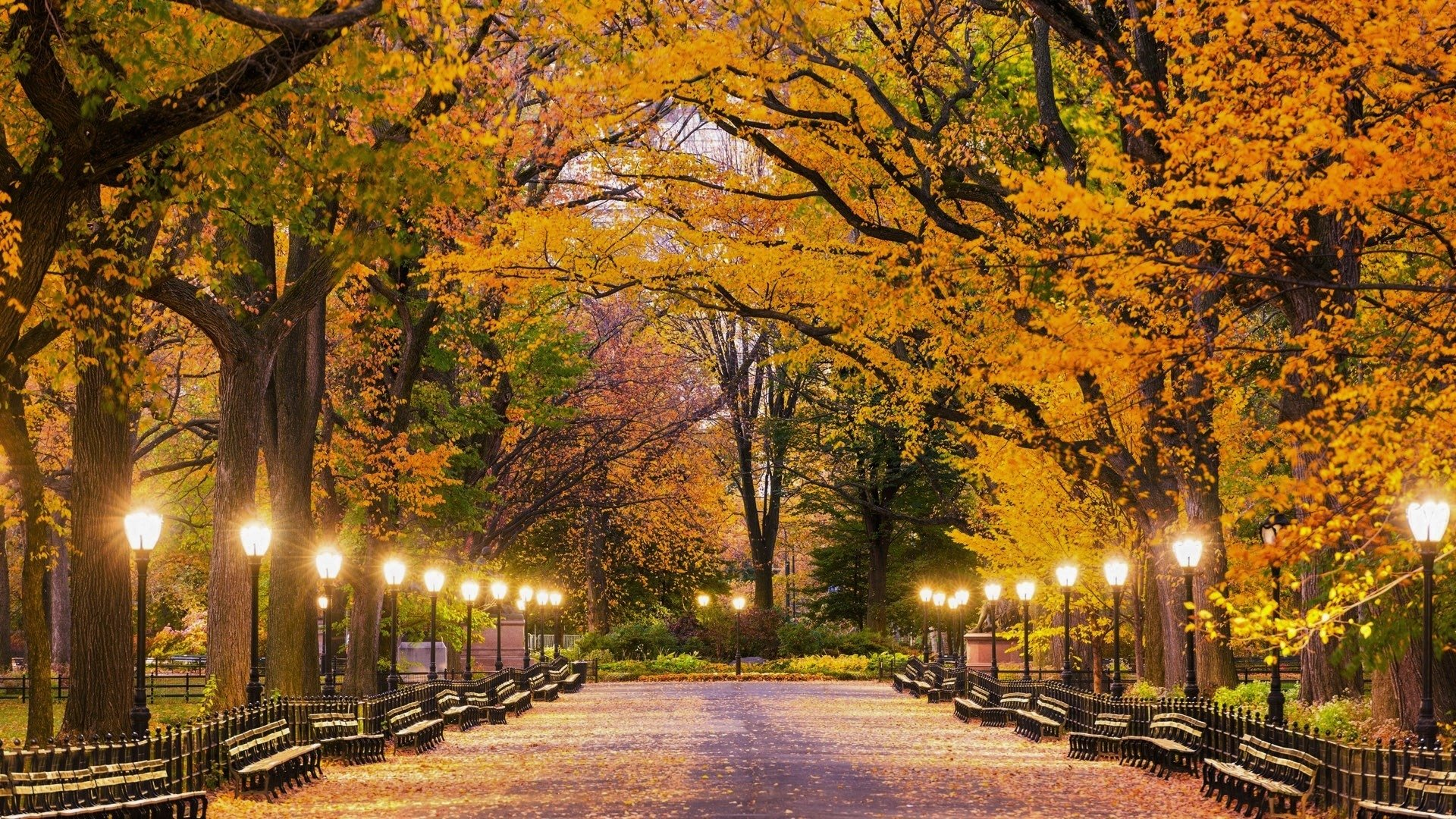 Fall Foliage Wallpaper Widescreen Central Park In Autumn Hd Wallpaper Background Image