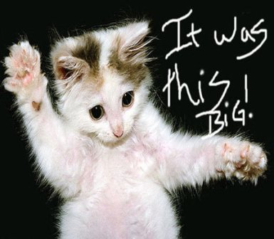 Cat Cute Wallpaper Download Fanpop Pets Images Kittys Being Kittys Wallpaper And