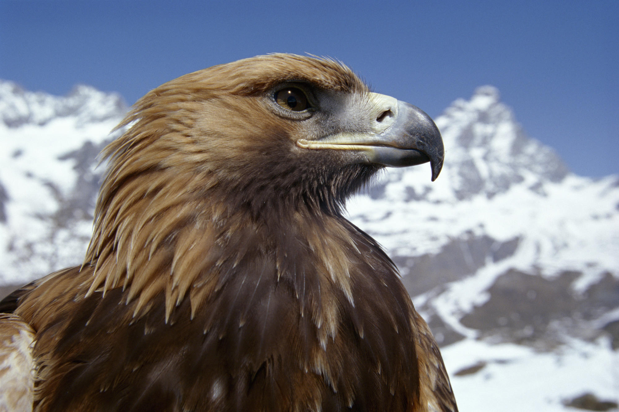 Animal Planet Animal Planet Images Eagle Hd Wallpaper And Background