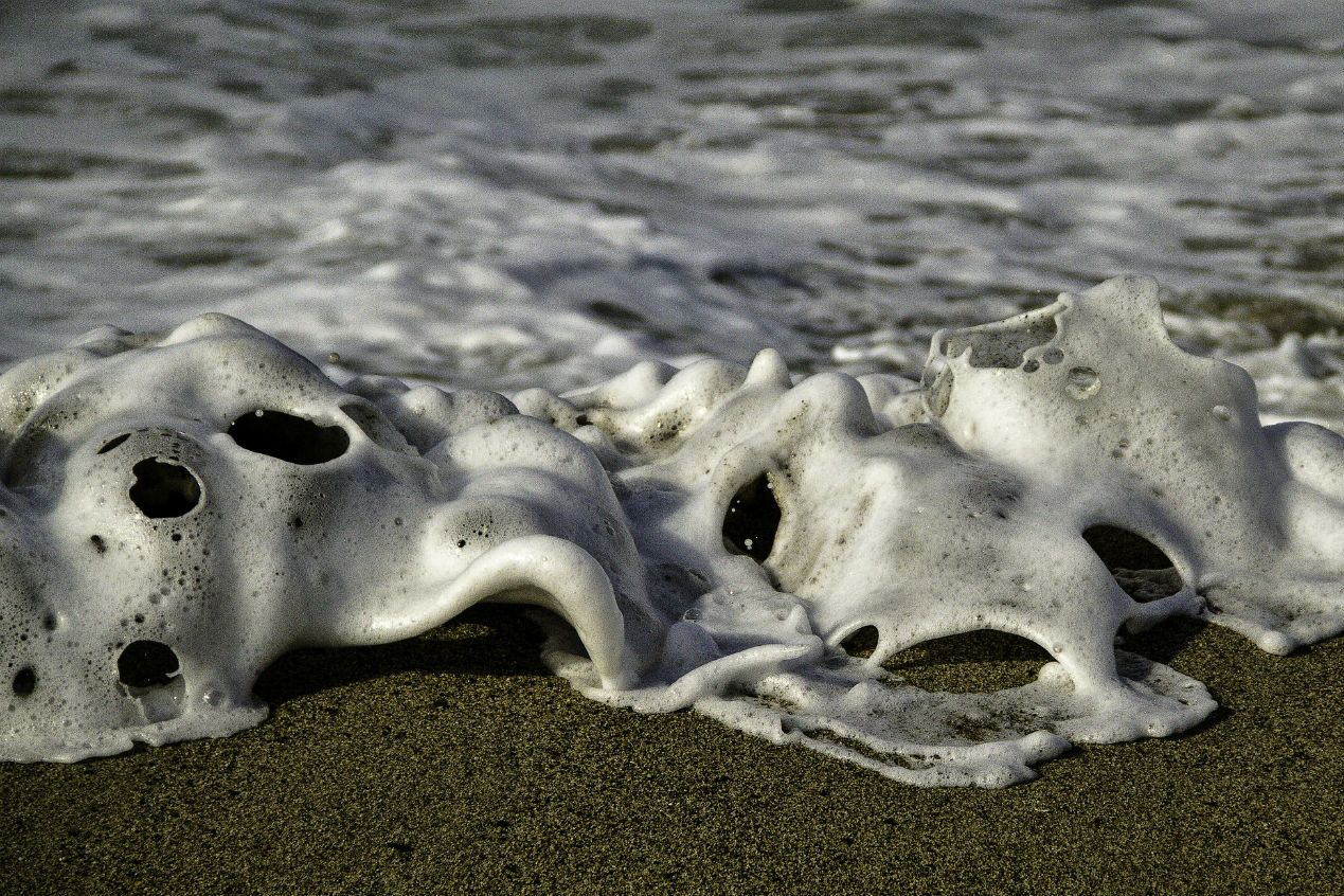8 Bizarre Creatures That Have Washed Ashore Mental Floss