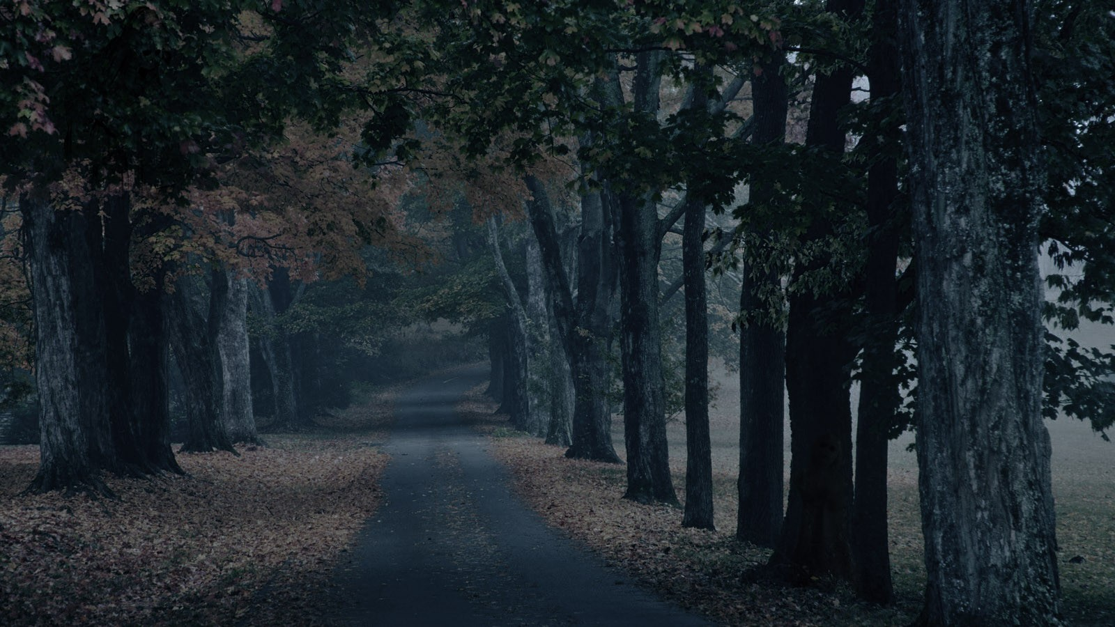 Wallpaper Images Of Fall Trees Lined Lake Path Wallpaper And Background Image 1600x900 Id 101819