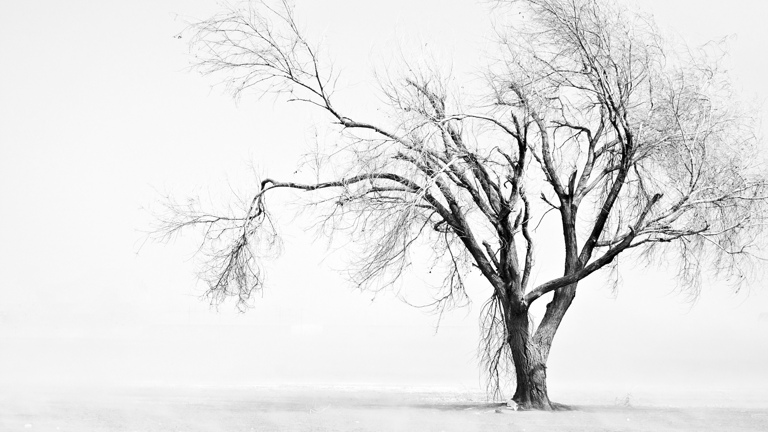 Dark Fall Iphone Wallpaper Sad Tree Hd Wallpaper Background Image 2560x1440 Id