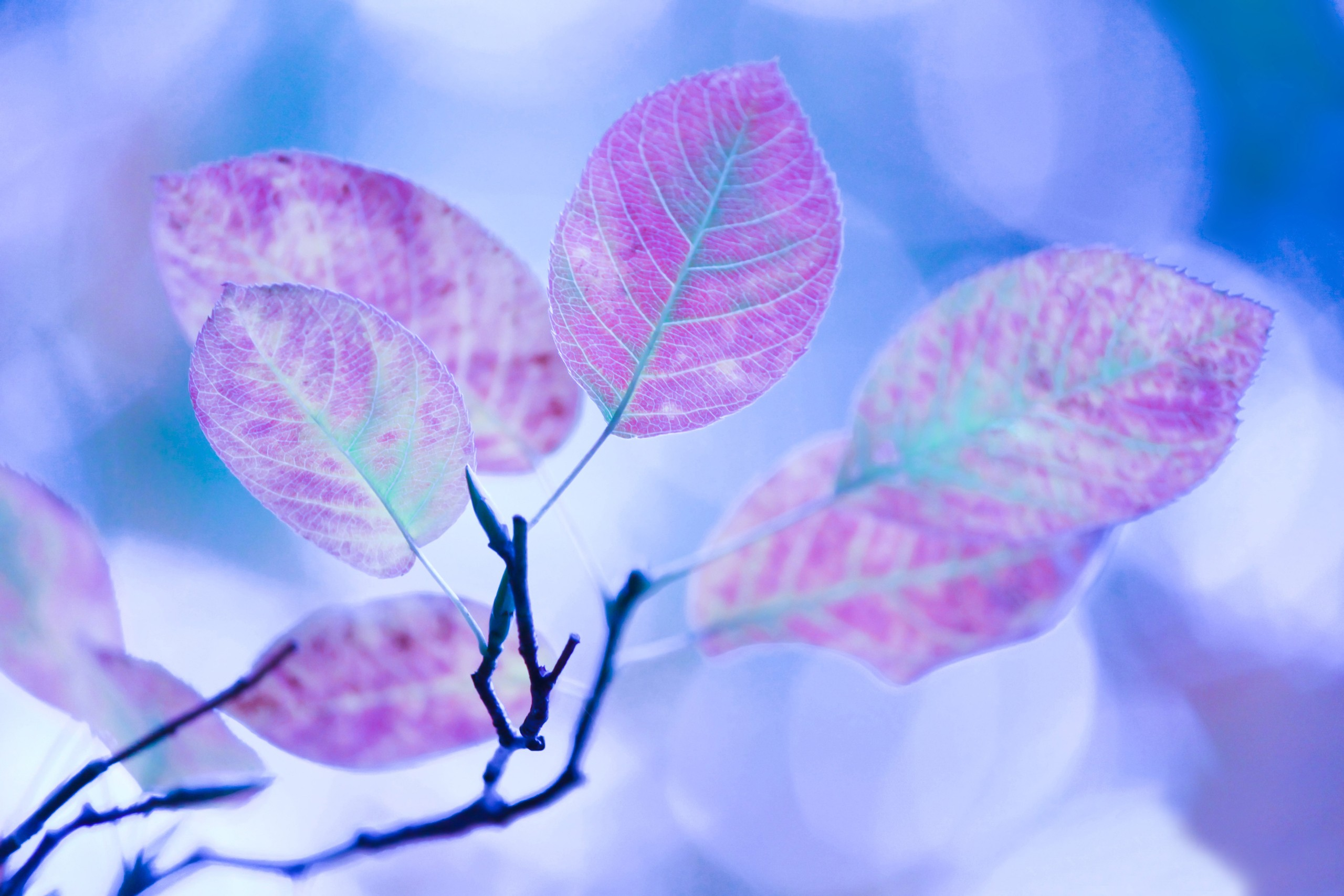 Lg Animated Wallpaper Leaf Hd Wallpaper Background Image 2560x1707 Id