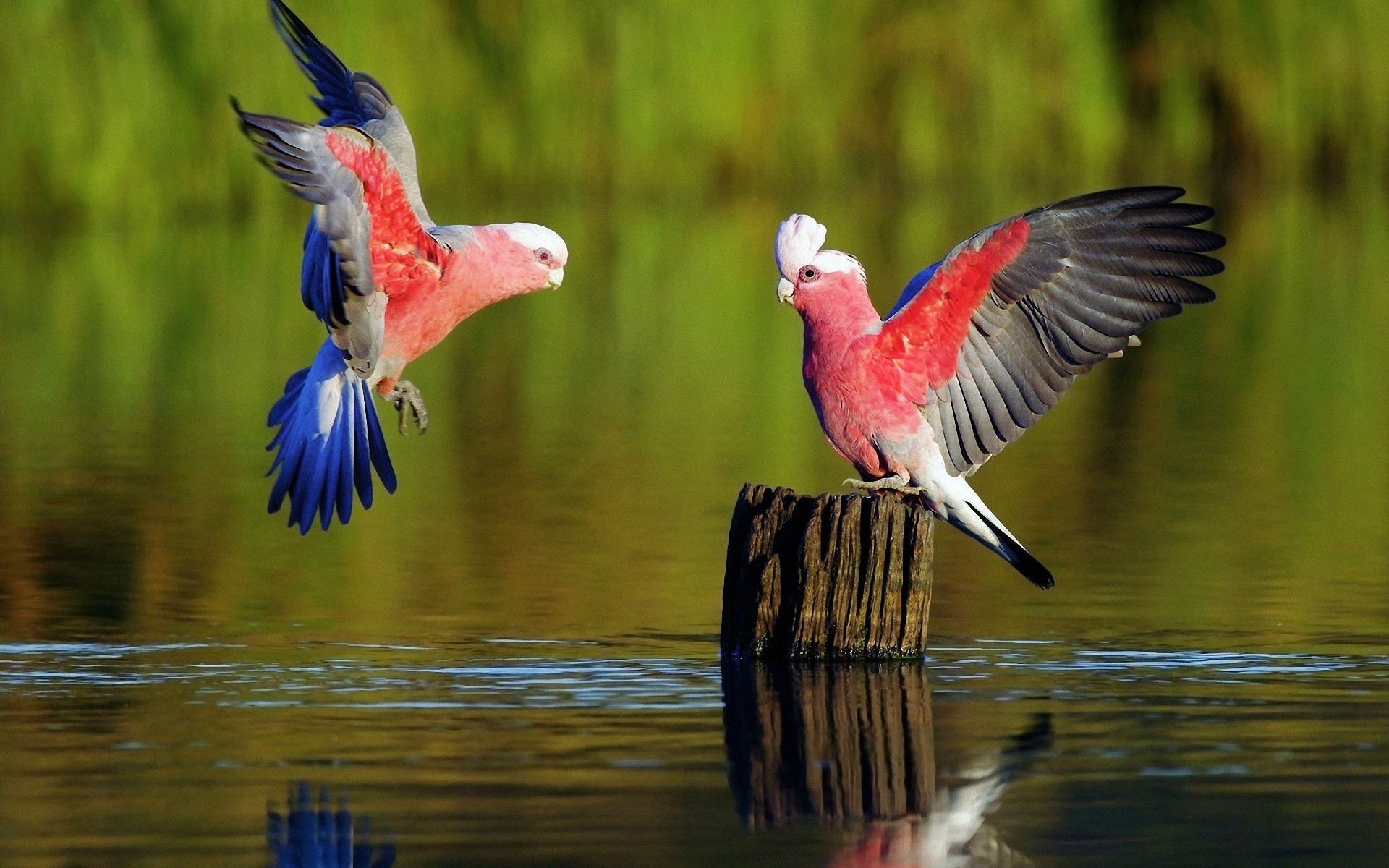 Parot Wallpapers 137 Parrot Hd Wallpapers Background Images Wallpaper Abyss