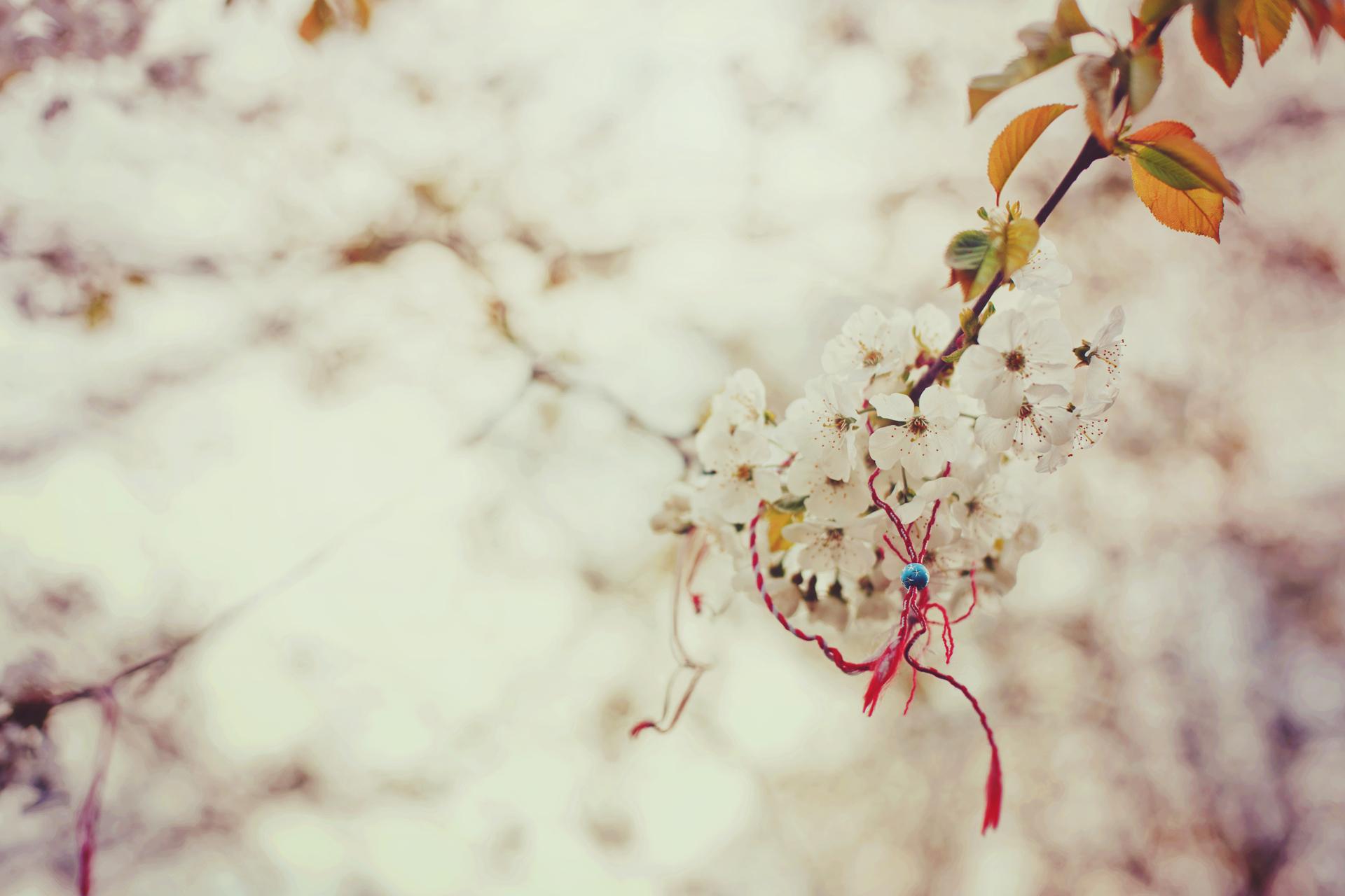 Rain Drop Wallpaper Hd صور ورود جميلة صور هادئة