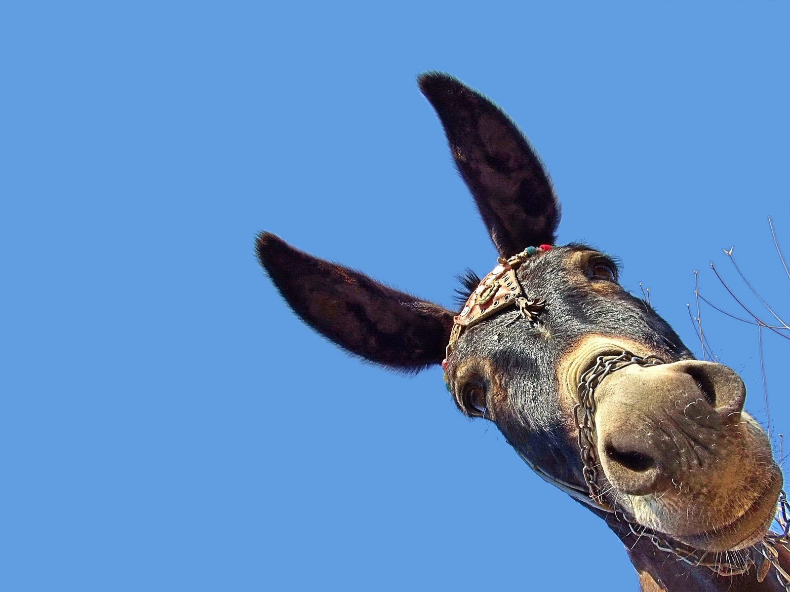 Donkey Wallpaper Donkey Wallpaper And Background Image 1600x1200 Id 53437