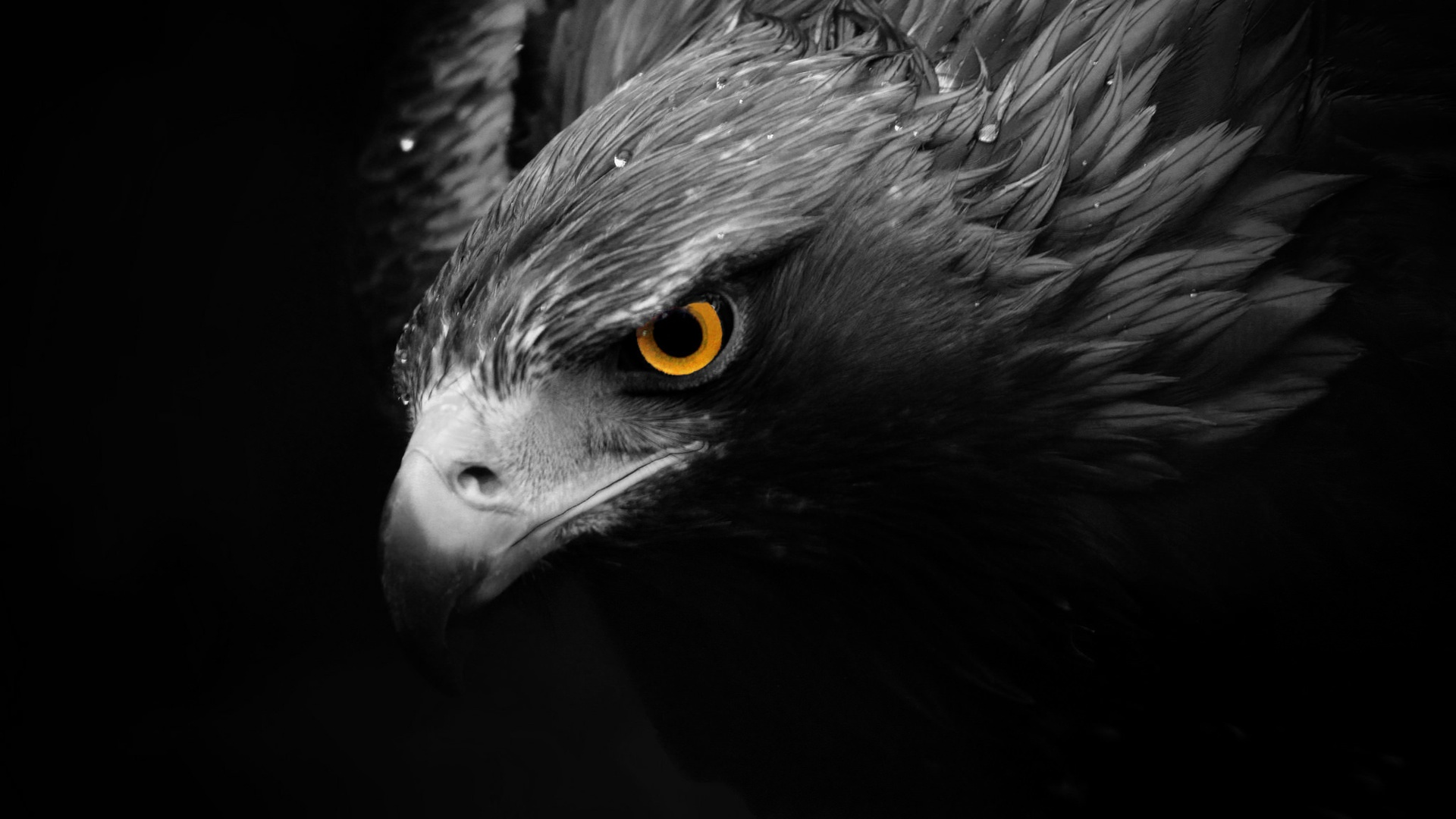 How To Download Wallpaper For Iphone 6 Adler Wallpapers Hintergr 252 Nde 1920x1080 Id 555367