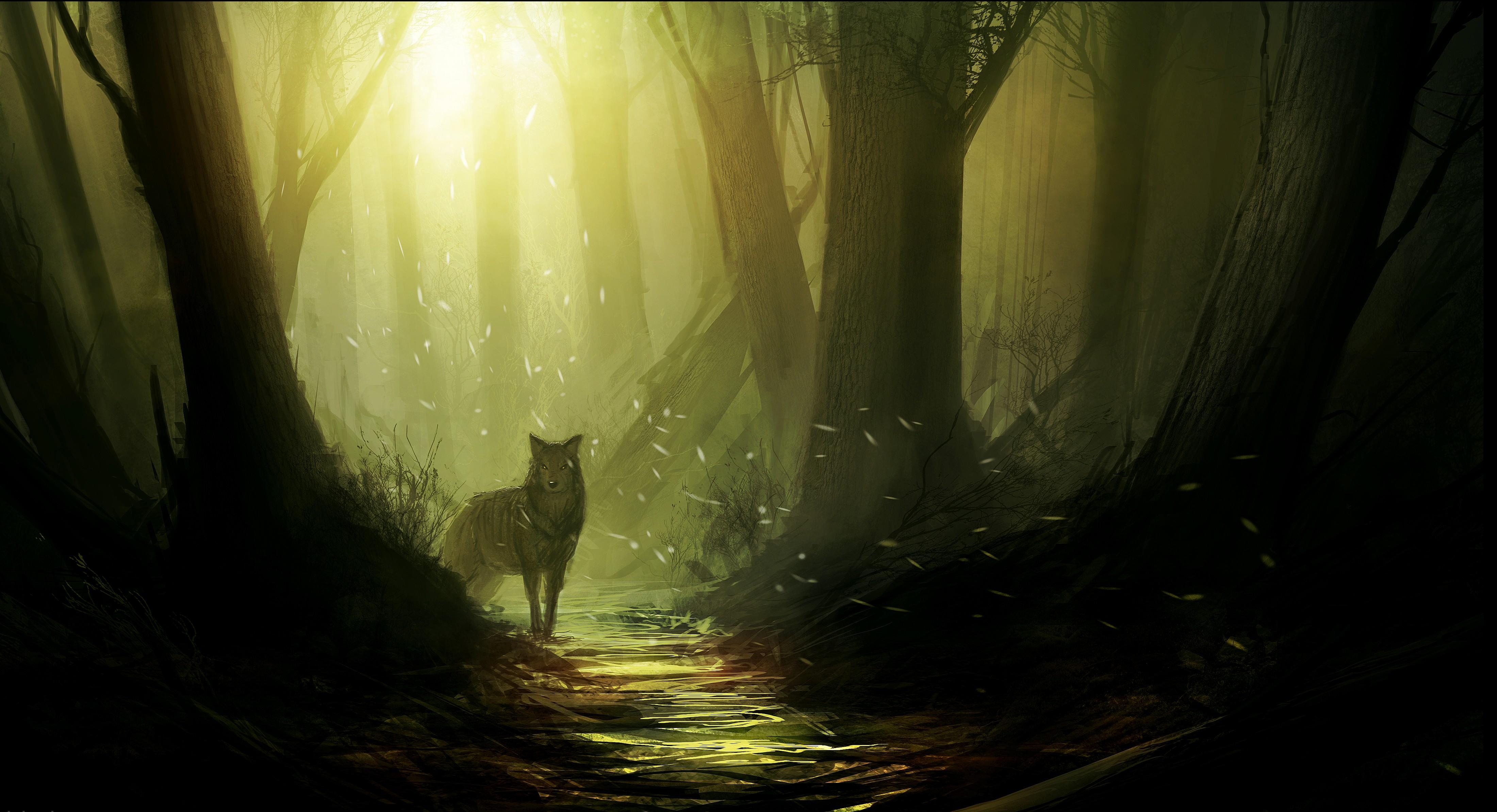 Lonely Girl Walking Wallpaper Wolf 4k Ultra Hd Wallpaper Background Image 4400x2388
