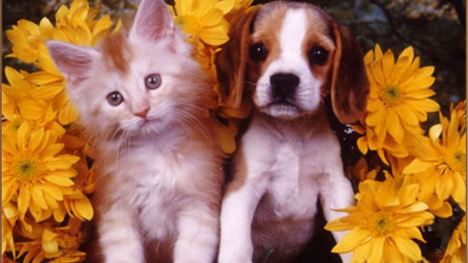 Cute Dogs And Puppies Wallpaper For Mobile Adorable Kitten And Puppy Hd Wallpaper Background Image