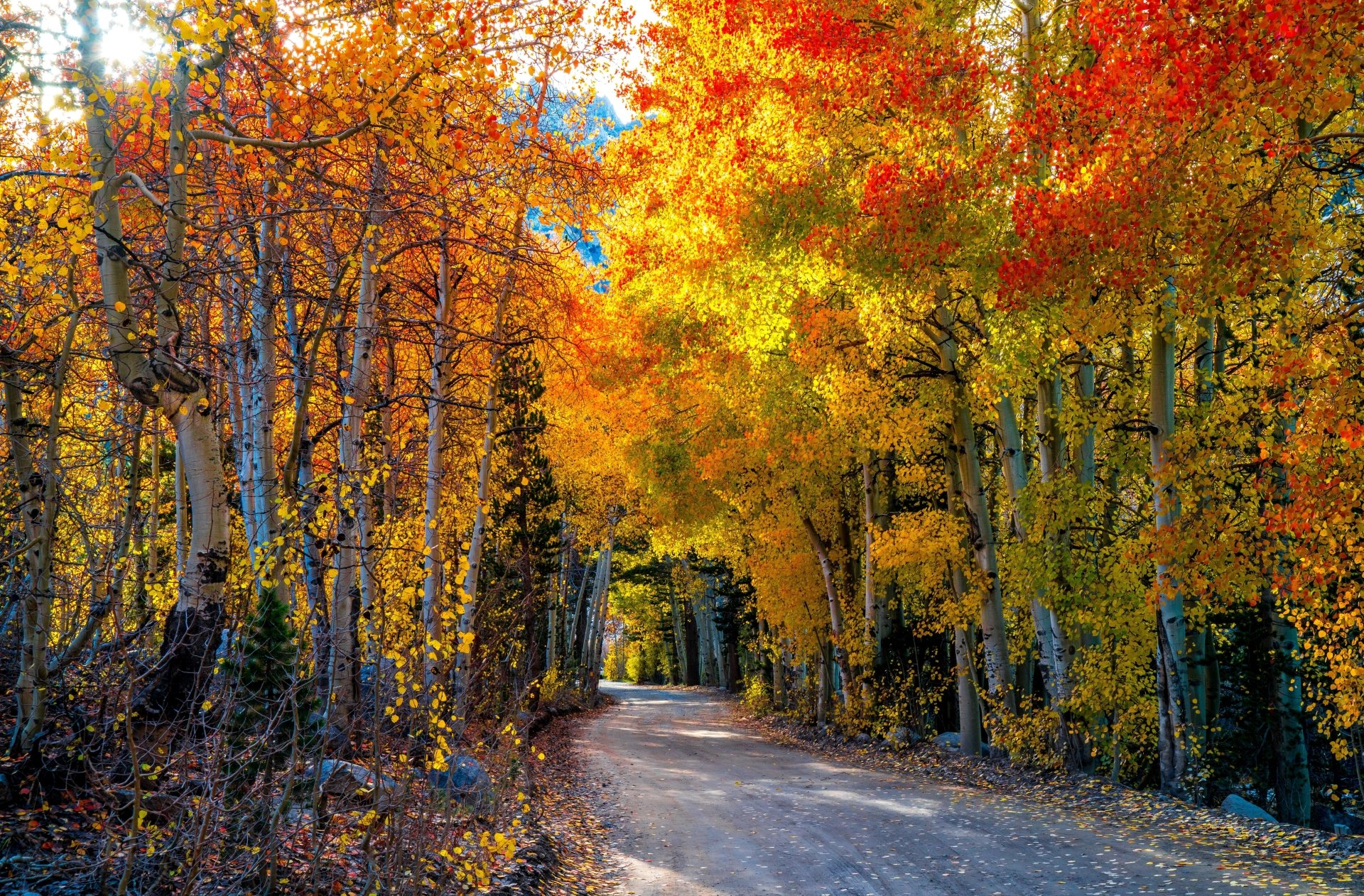 Falling Leaves Wallpaper For Iphone Autumn Road 8k Ultra Hd Wallpaper Background Image