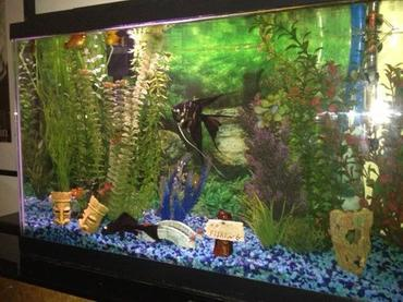 Selecting a Background for your Freshwater Tank | RateMyFishTank.com