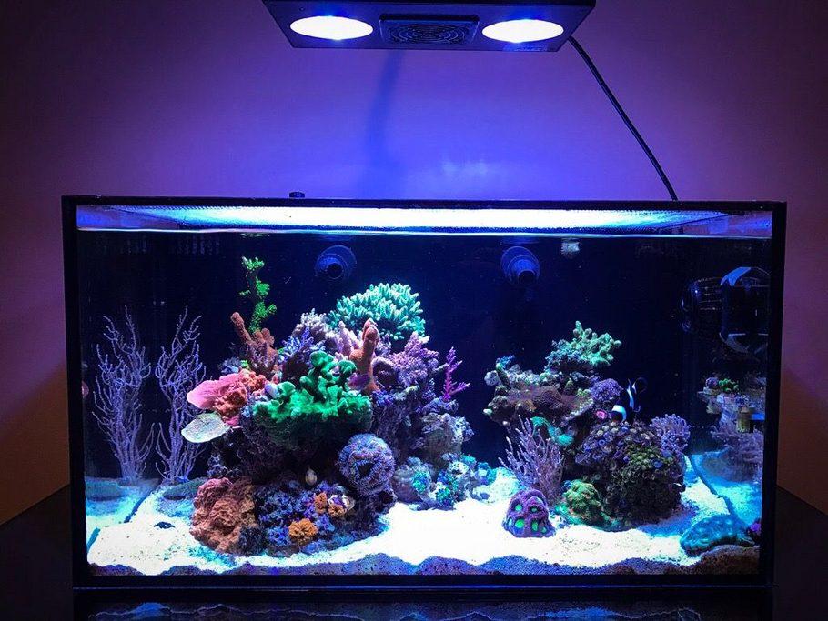 Most Beautiful Reef Tanks All Time Ratemyfishtankcom