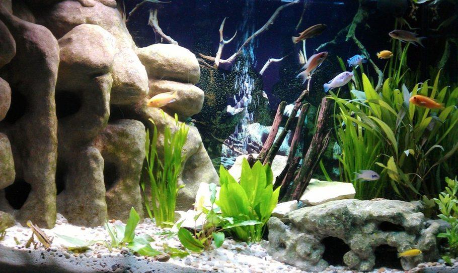 Fish Tank 3d Wallpaper Most Beautiful Freshwater Tanks 2012 Ratemyfishtank Com