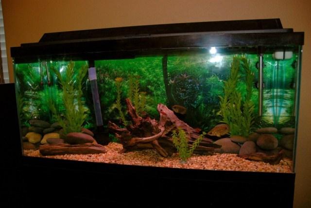 Freshwater fish tank maintenance 30 gallon 2017 fish for 30 gallon hexagon fish tank
