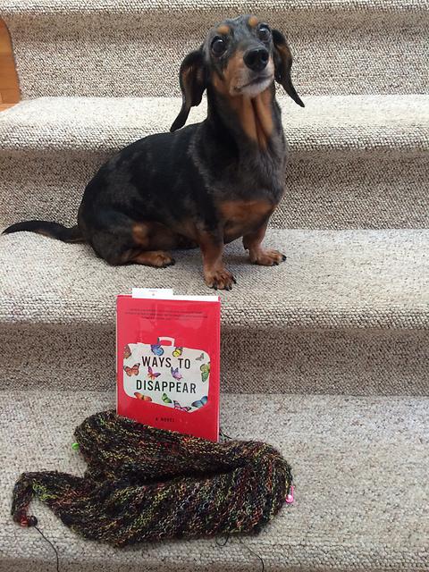 WIP, yarn along and a dachshund