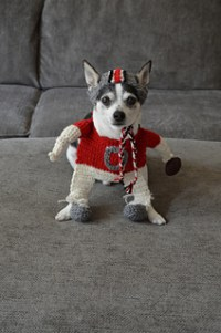 Ravelry: Small Dog Football Player Costume & Helmet ...