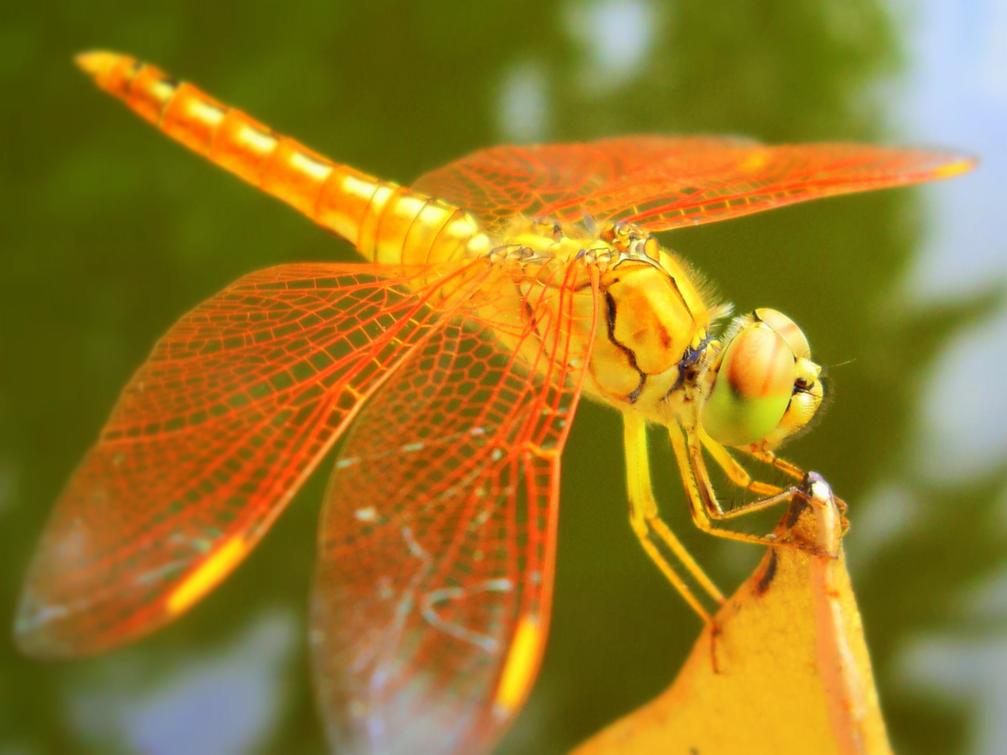 Wallpaper Quotes Iphone 6 Plus Dragonfly Computer Wallpapers Desktop Backgrounds