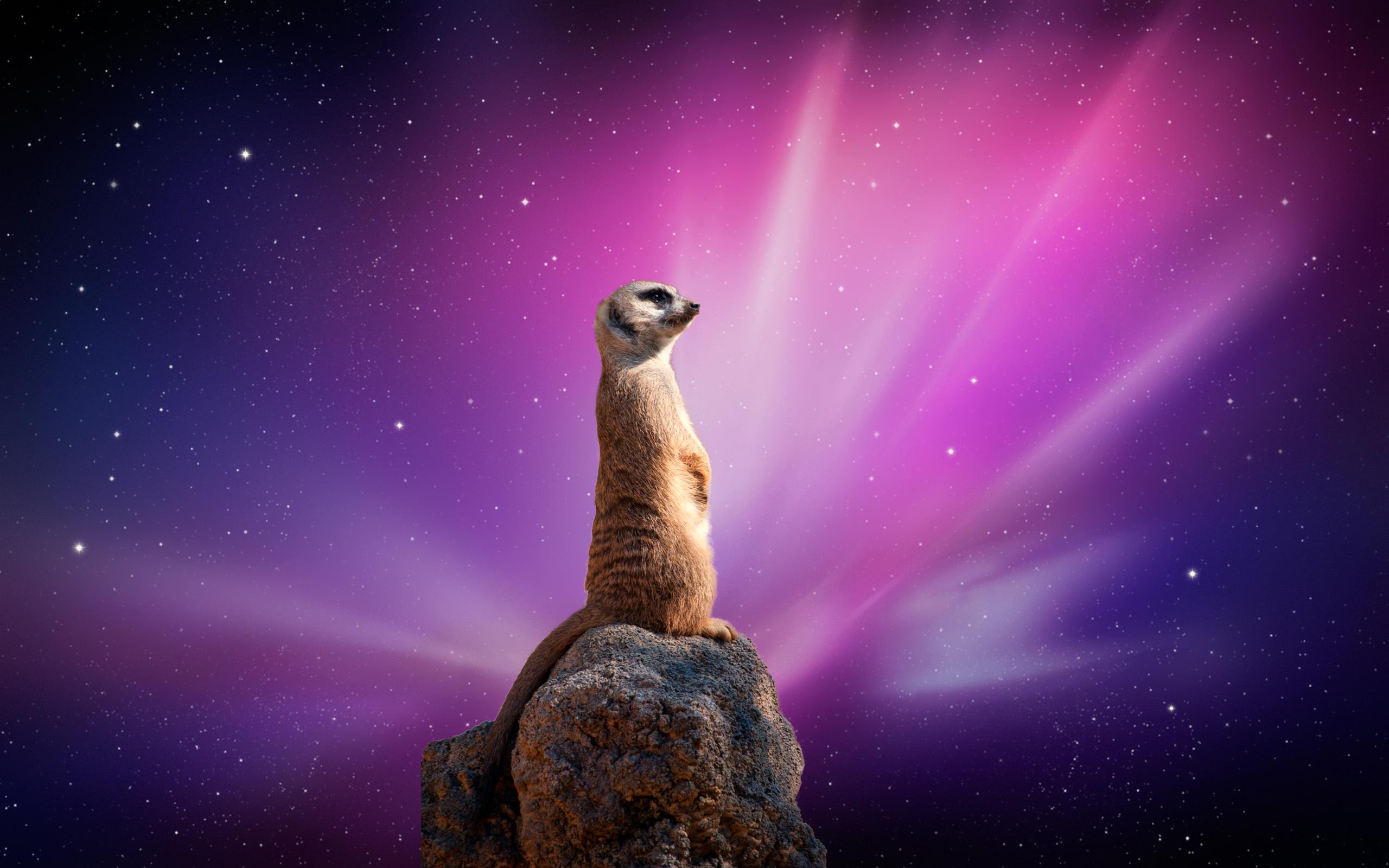 Sloth Wallpaper Cute Meerkat Full Hd Wallpaper And Background Image 2560x1600